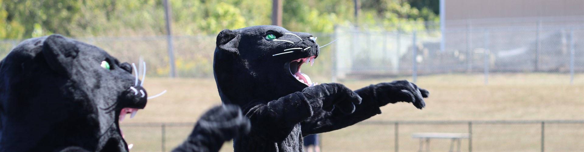 Two panther mascots dance